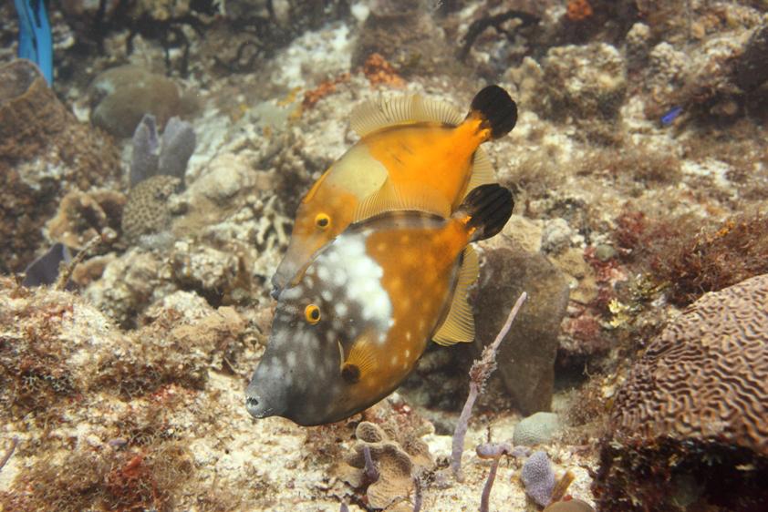 A denizen of diving mexico