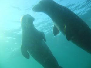 Farnes Islands, 6th November, 2011