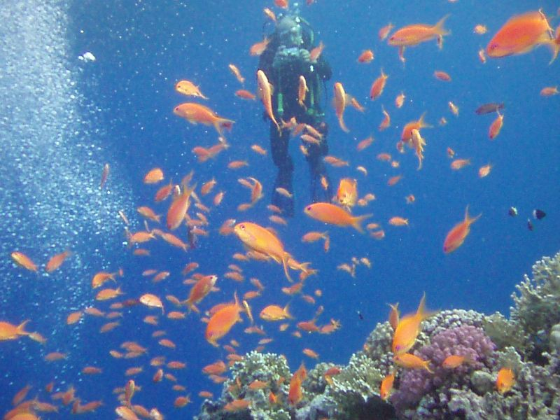 Tenth place: DO with Anthias in the foreground  - Duncan