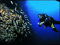 Dive 2006