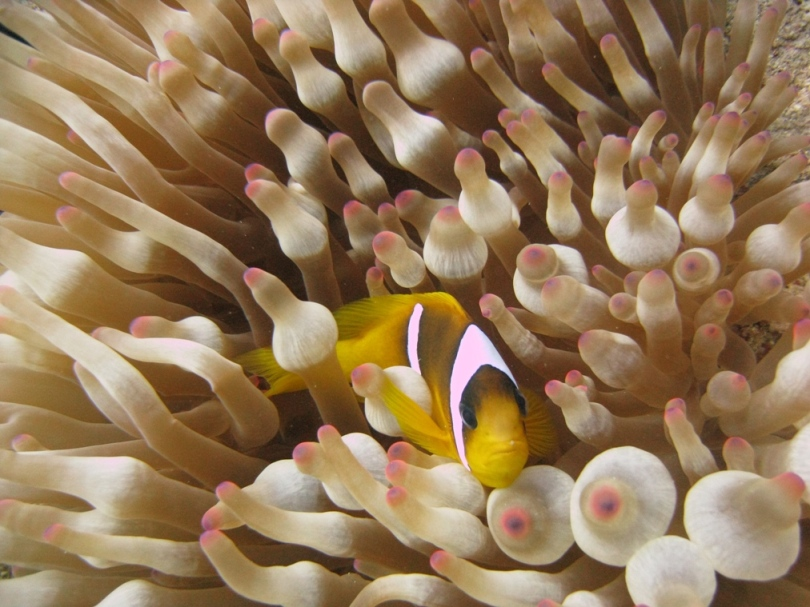 This is my anenome