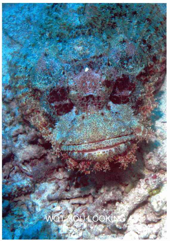 Seventh place: Wot you looking at? scorpion fish - Cyril